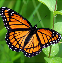 Butterfly Bytes: Life Span