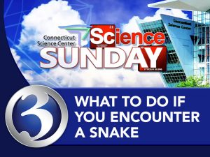 Science Sunday: What to do if you encounter a snake?