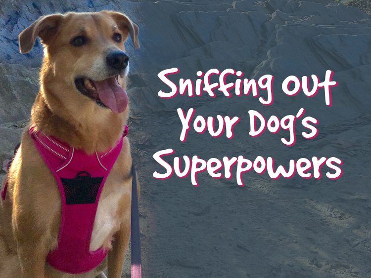 Sniffing Out Your Dog's Superpowers