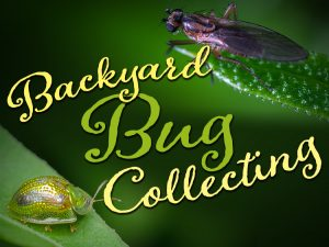 Insects in Your Backyard: Celebrating Bug Week