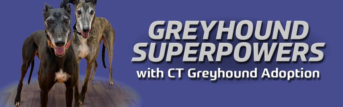 Greyhound Superpowers with Connecticut Greyhound Adoption