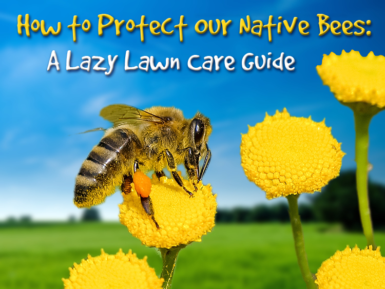 How to Protect Our Native Bees: A Lazy Lawn Care Guide