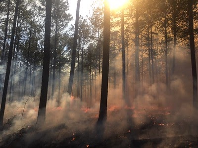 A 2018 controlled burn in Georgia's Oconee National Forest // Photo by U.S. Forest Service/Tim Kolnick