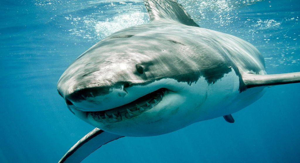 Sharks: Science, Myths, and Careers