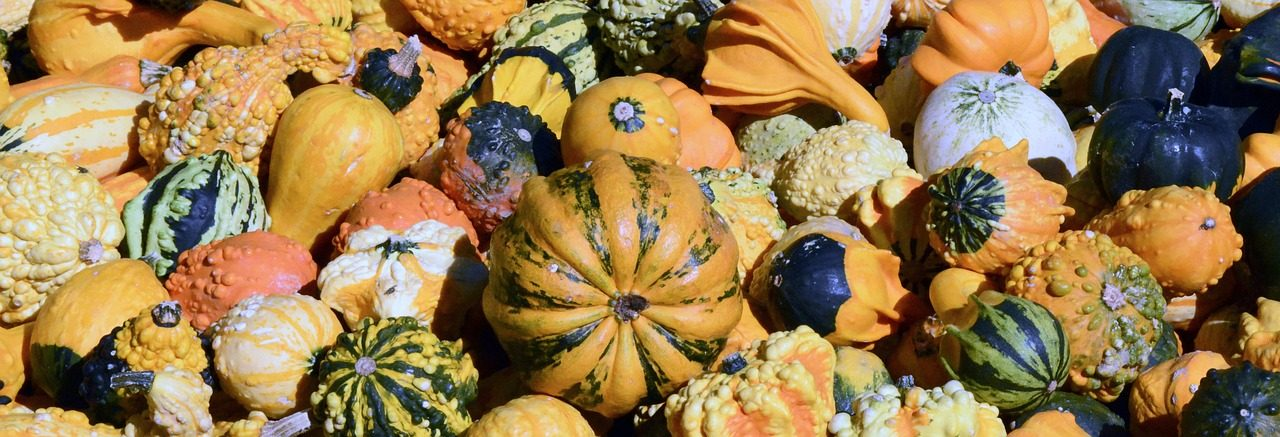 Science At Play: Fall Scavenger Hunt