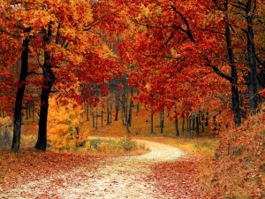 Today Marks the Fall Equinox, Here is Everything You Need to Know